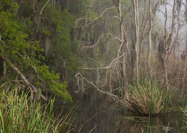 Swamp Mystic