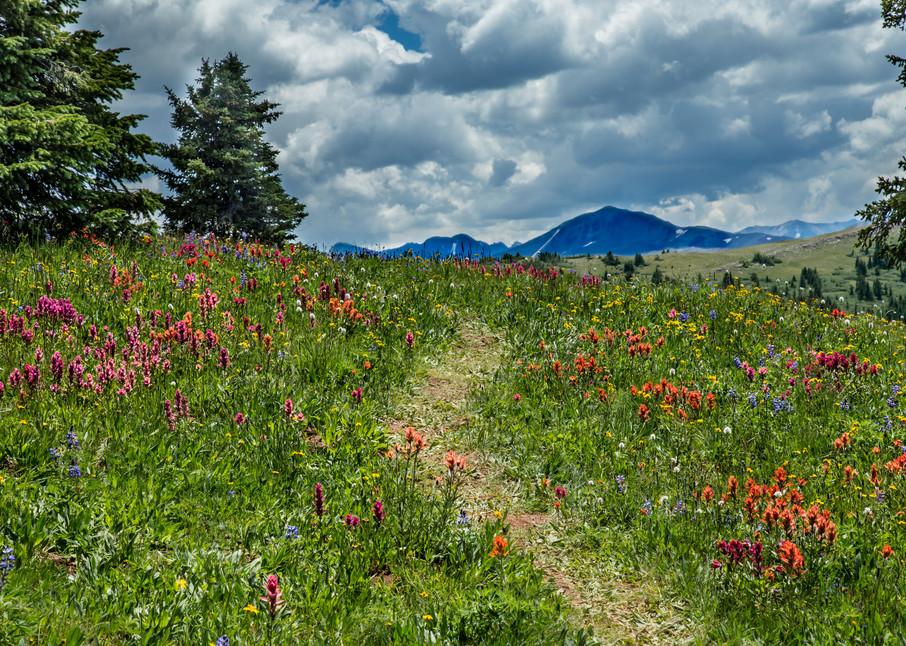 Colorado Wildflower Trail Photography Art | Kirk Fry Photography, LLC