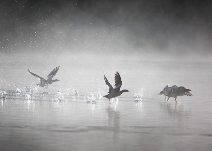 Flight Control Photography Art | Brokk Mowrey Photography
