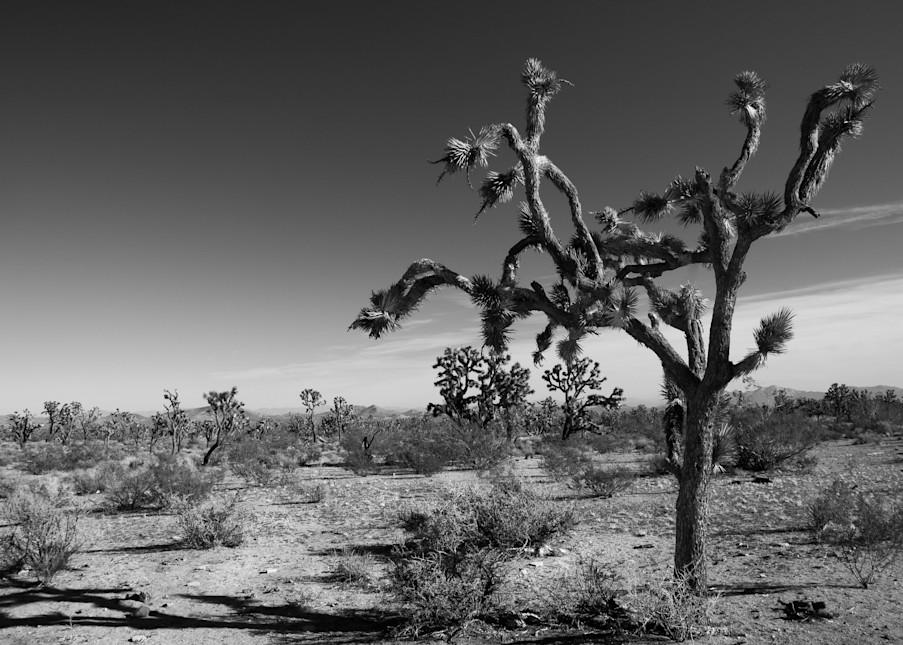 Joshua Tree In Black And White #2 Photography Art | Linda Roberts Photography