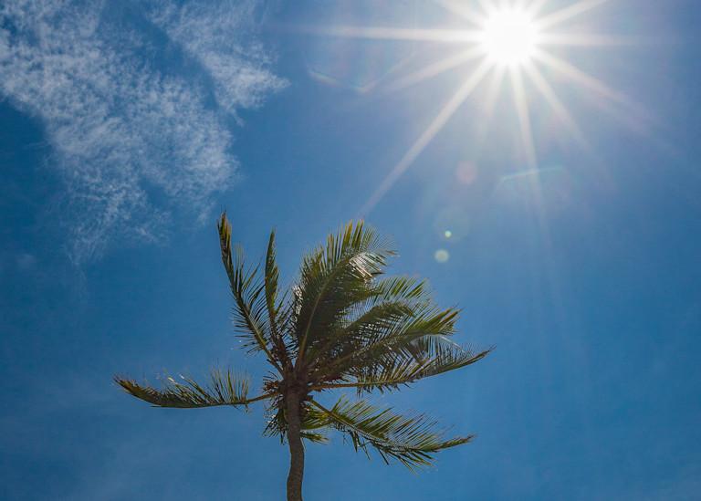 Palm Sunburst