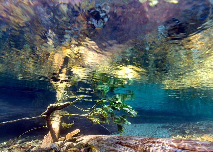 Underwater Monet # 0988 Photography Art   Mary Edwards Photography