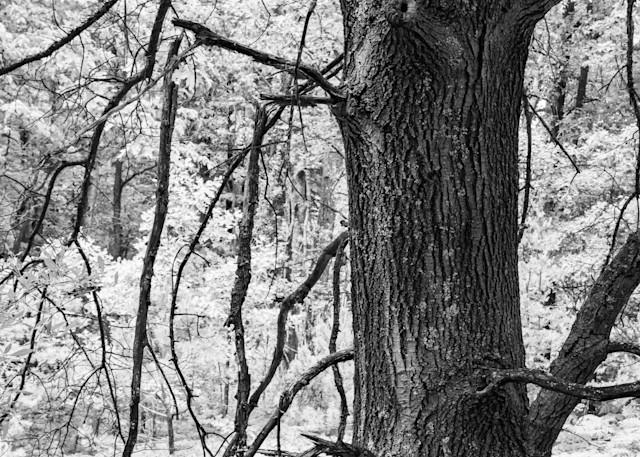 Edge Of Sun Photography Art | Spry Gallery