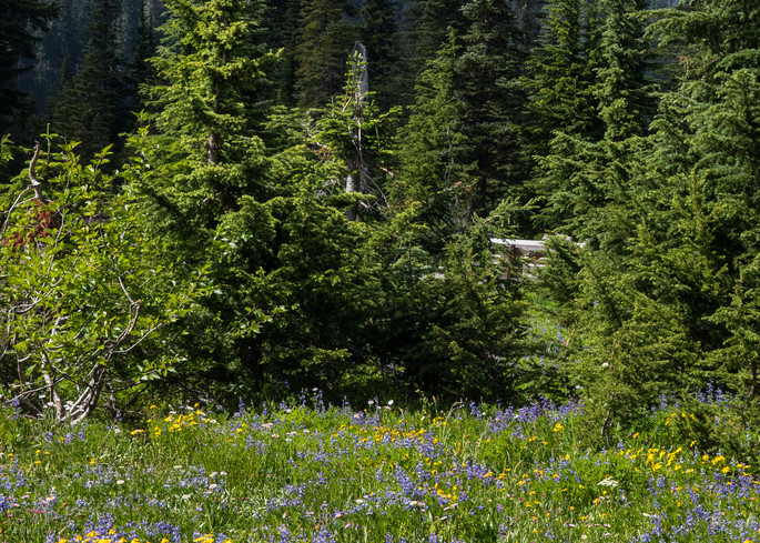 Flowers Mountains Trees Photography Art | Leiken Photography