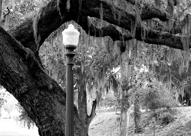 Mount Dora Lightpole And Tree Art | DARDISartgalleries