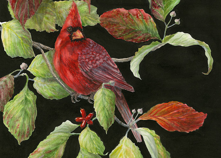 """""""Fall Reds""""   Northern Cardinal In The Dogwood Art 