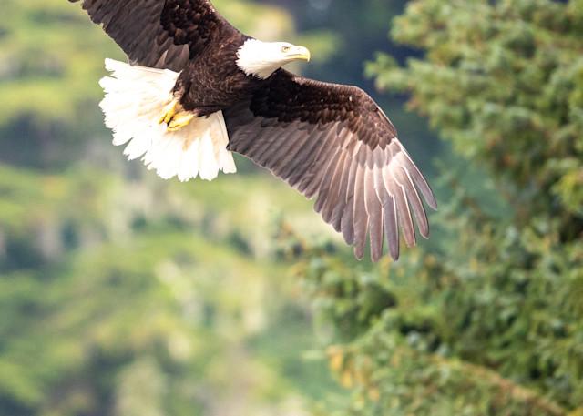 Eagle Rising Photography Art | Brokk Mowrey Photography