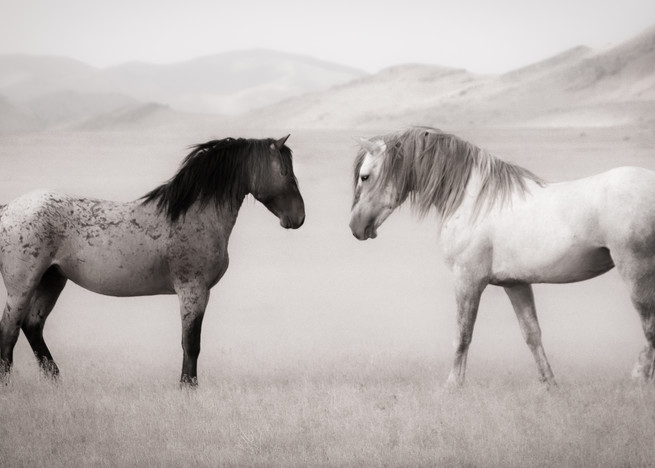 Fire And Ice Photography Art | Koru Photo Designs