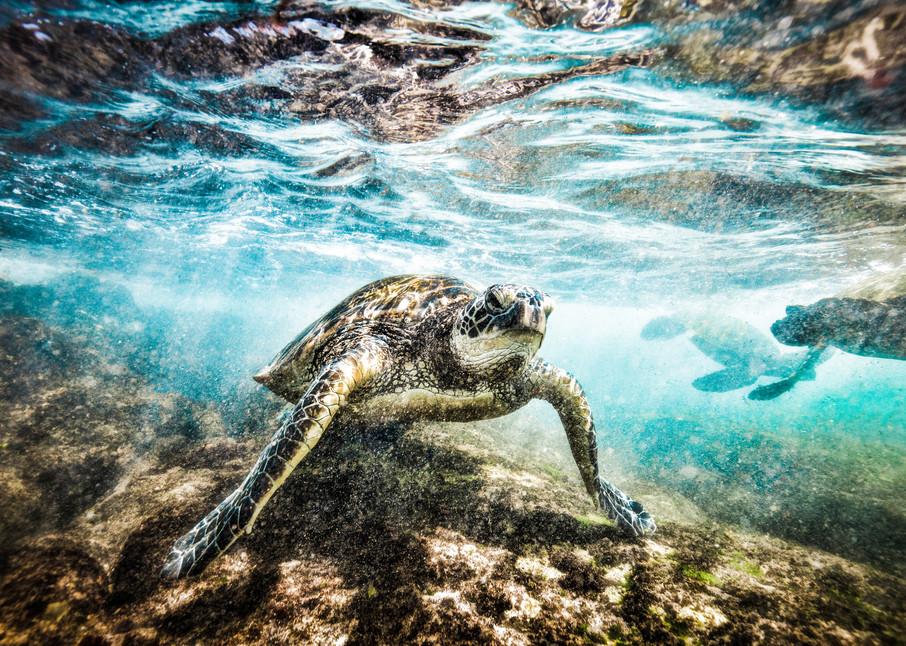 Topsail Island Sea Turtle Photography