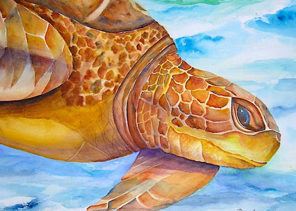 Loggerhead Turtle, From an Original Watercolor Painting