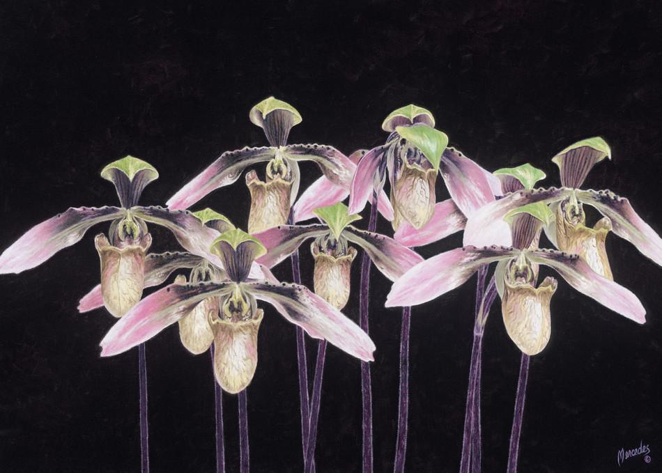 Orchids   Prints Art | Mercedes Fine Art
