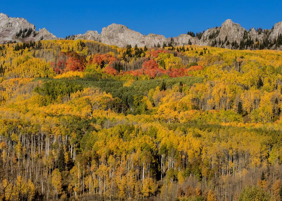 Autumn Color At Kebler Pass Colorado Photography Art | Kirk Fry Photography, LLC