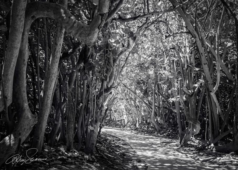 Arbor Lace Photography Art | cosimo scianna