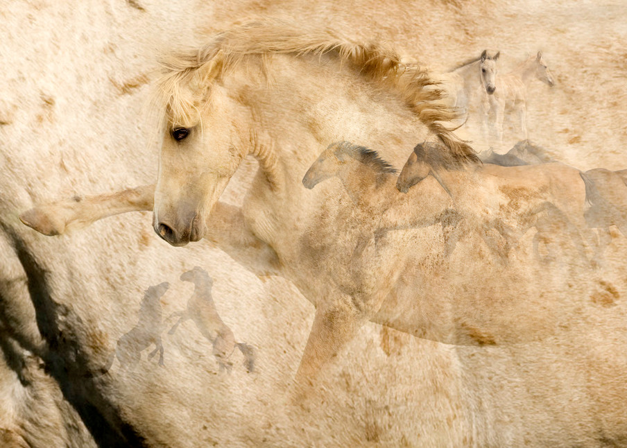 Wild Mustang Cloud Pryor Mountains Photography