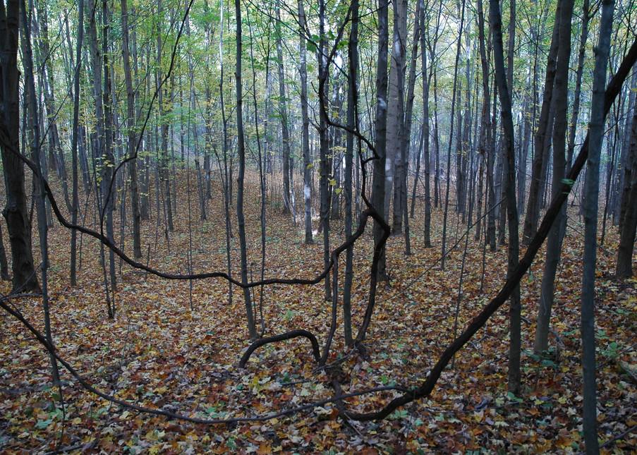 'woods And Vines' Art | Cera Arts