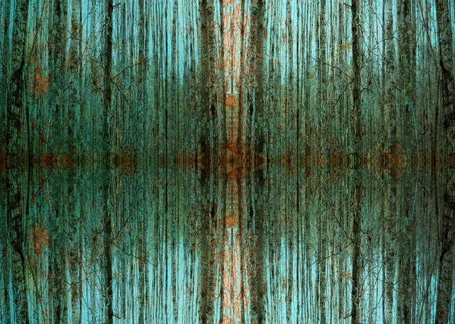 Birch Zen IV, by Laura Grisamore