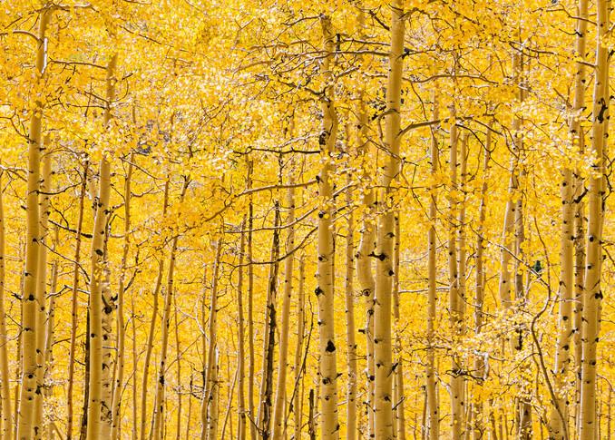 Ohio Creek Gold Asf Photography Art | Ken Smith Gallery