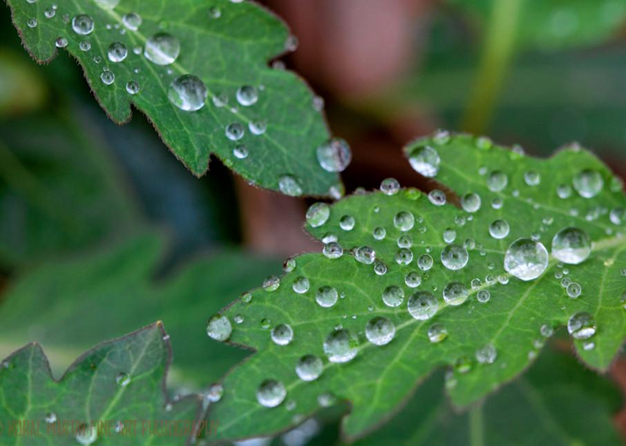 Leaves Raindrops 9121 Devils Den  Photography Art | Koral Martin Healthcare Art