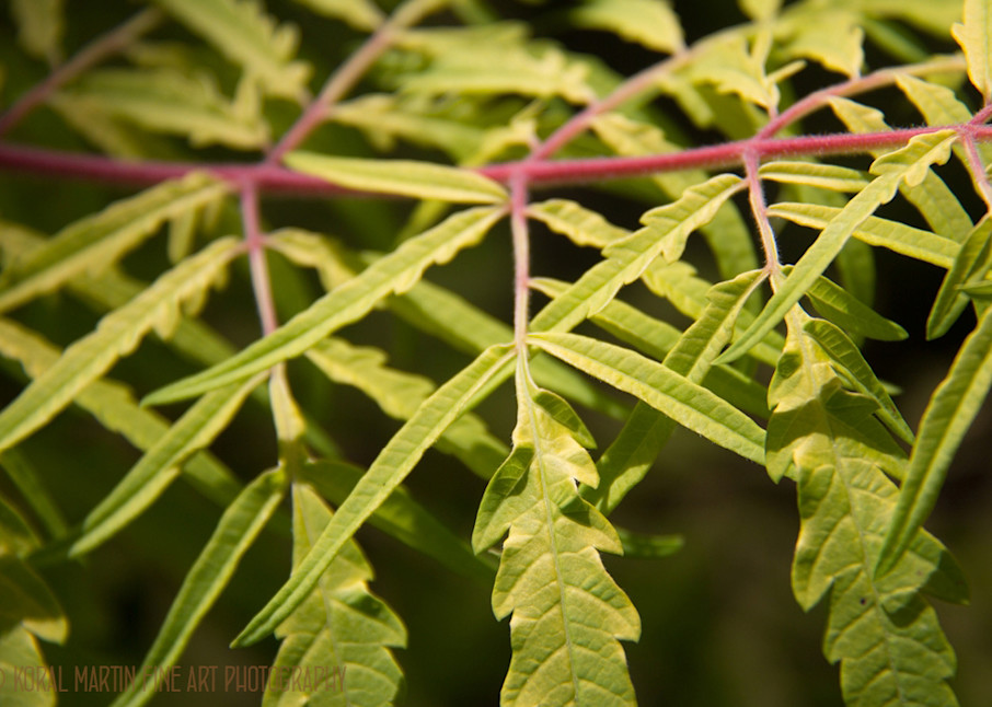 Leaves Crystal Bridges 3791  Photography Art | Koral Martin Healthcare Art