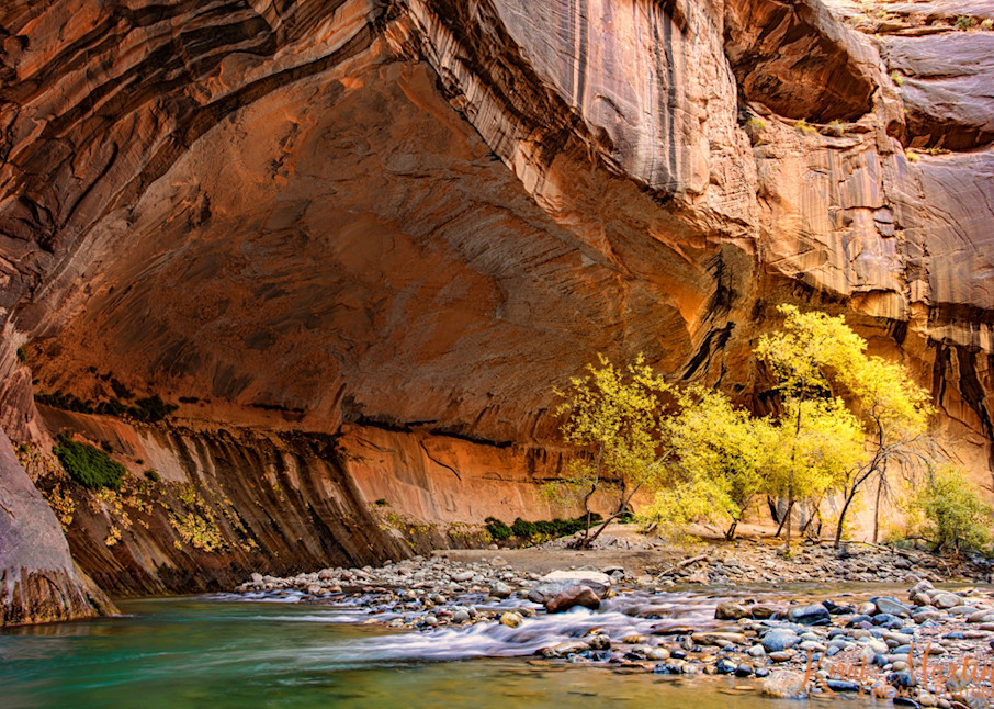 Zion Narrows Water Fall Trees 2875  Photography Art | Koral Martin Healthcare Art
