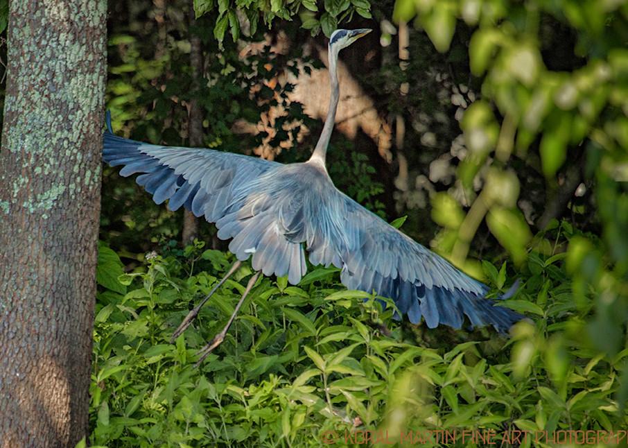 Heron Flyingin Woods0920     Photography Art | Koral Martin Healthcare Art