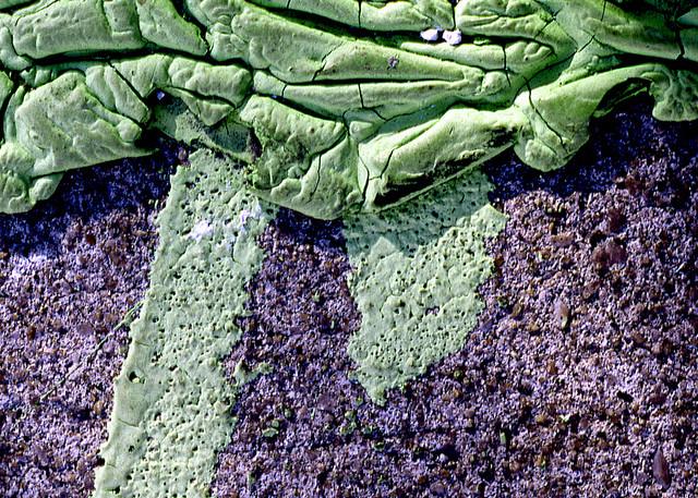 Green Abstract Williamsburg Sidewalk Print – Sherry Mills