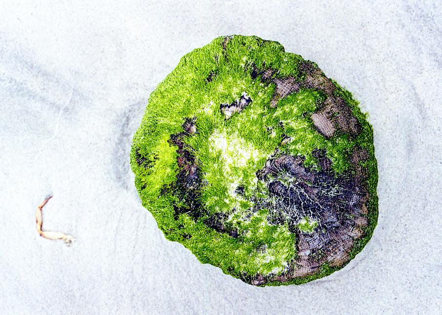 Long Beach NY Close-Up Moss Wood Beach Print – Sherry Mills