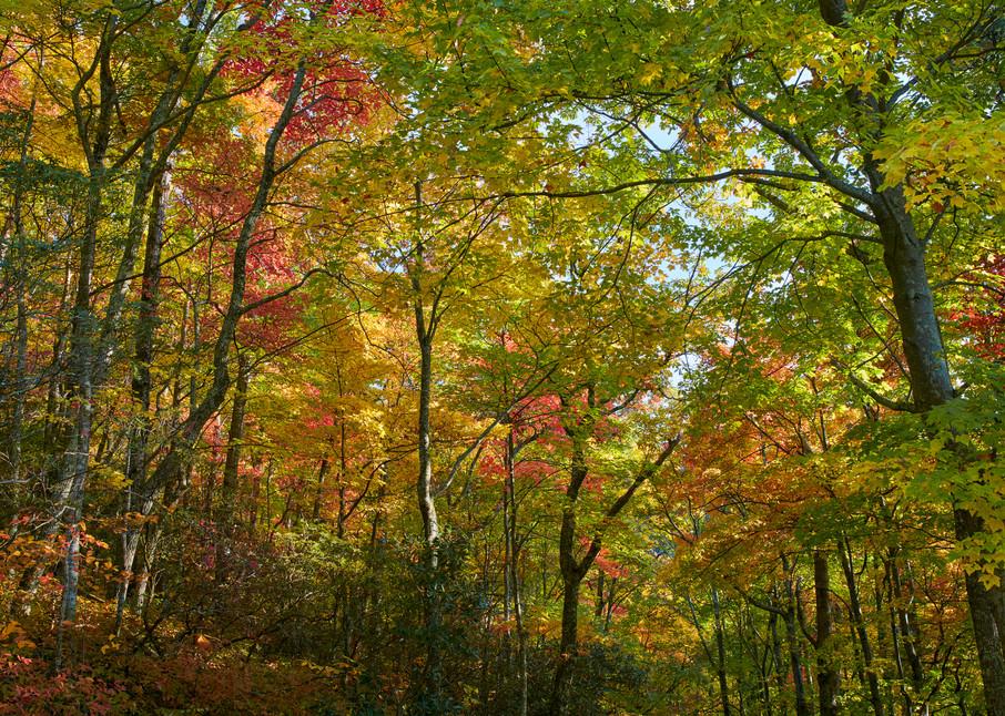 Roaring Fork Canopy
