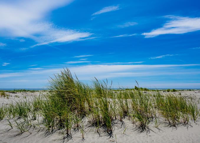 Beach Grass, North Cove, Washington, 2020