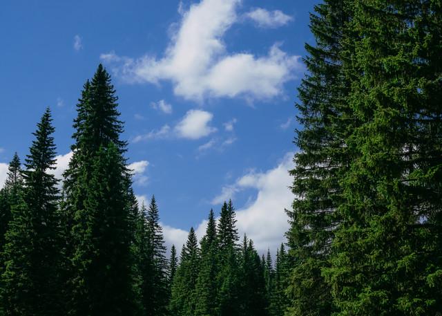 Forest Meadow, Little Naches, Washington, 2020