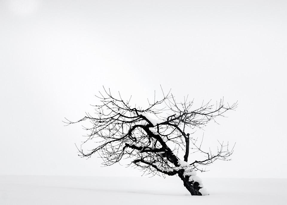 Hokkaido Study08 Art | Roy Fraser Photographer