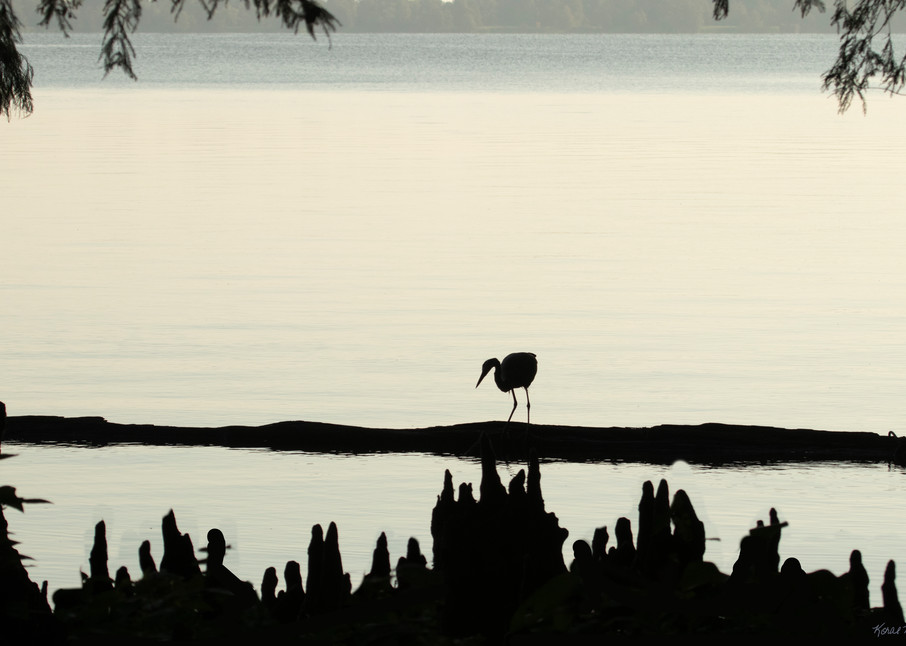 Early Morning Fishing     Blue Heron Silhouette 7511 Art | Koral Martin Fine Art Photography