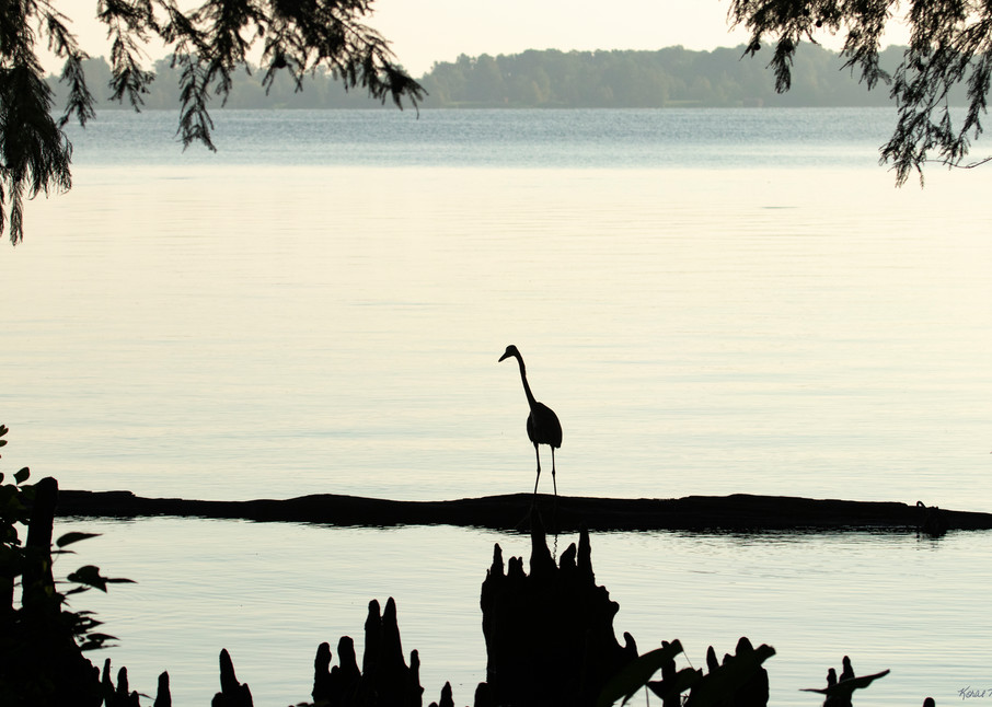 Early Morning Fishing     Blue Heron Silhouette 7509 Art | Koral Martin Fine Art Photography
