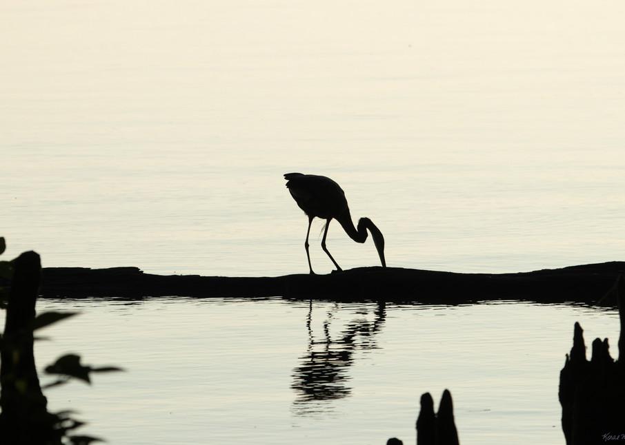 Early Morning Fishing     Blue Heron Silhouette 7522 Art | Koral Martin Fine Art Photography