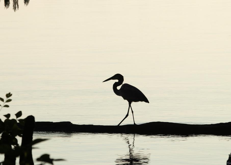 Early Morning Fishing     Blue Heron Silhouette 7524 Art | Koral Martin Fine Art Photography