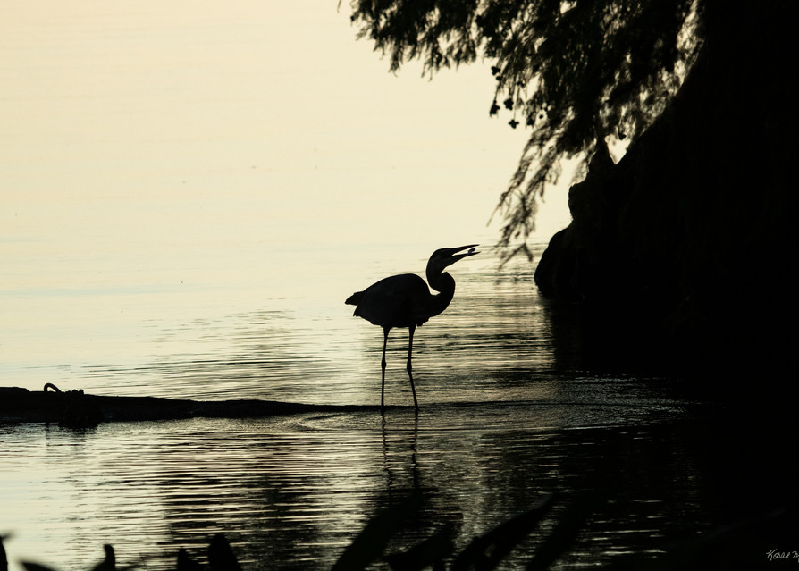 Heron Silhouettes  7454  Photography Art | Koral Martin Healthcare Art