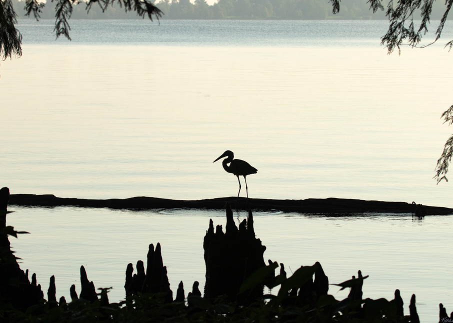 Heron Silhouettes  7514  Photography Art | Koral Martin Healthcare Art