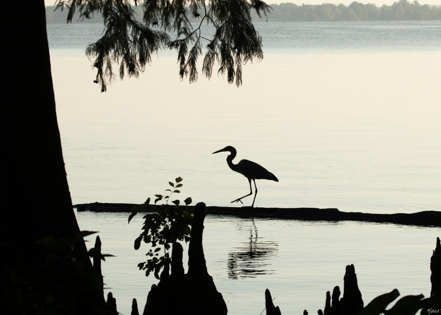 Heron Silhouettes  7528  Photography Art | Koral Martin Healthcare Art