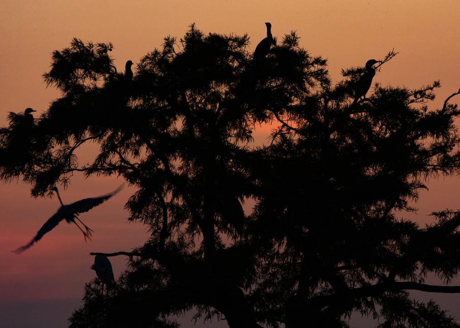 Egret Tree Sunrise  8417  Photography Art | Koral Martin Healthcare Art