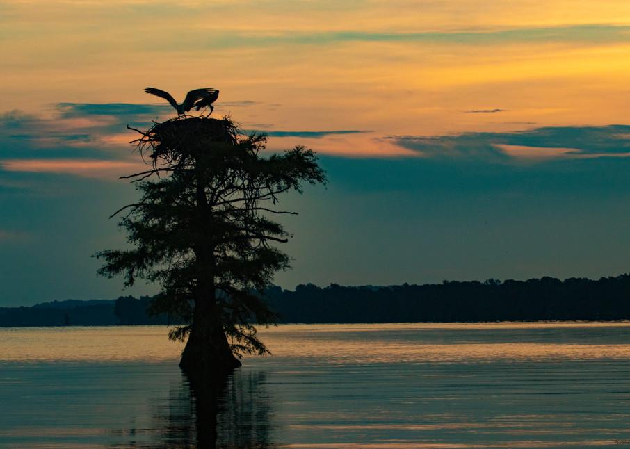 Osprey Nest Wings Sunrise V2  9117  Photography Art | Koral Martin Healthcare Art