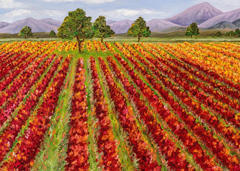 Wine Country ~ Change Of Seasons   Prints Art | Mercedes Fine Art
