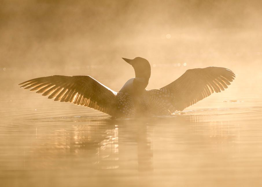 Loon at Daybreak on Ojibway Lake
