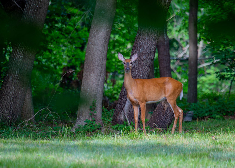 Standing Doe Art | capeanngiclee