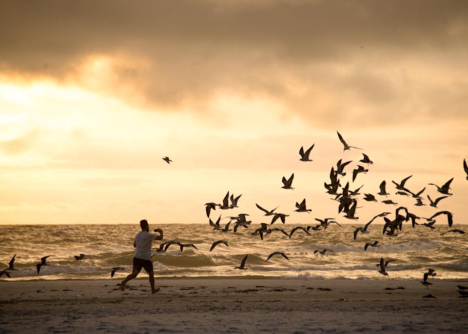 Dancing With Gulls Photography Art | Hatch Photo Artistry LLC