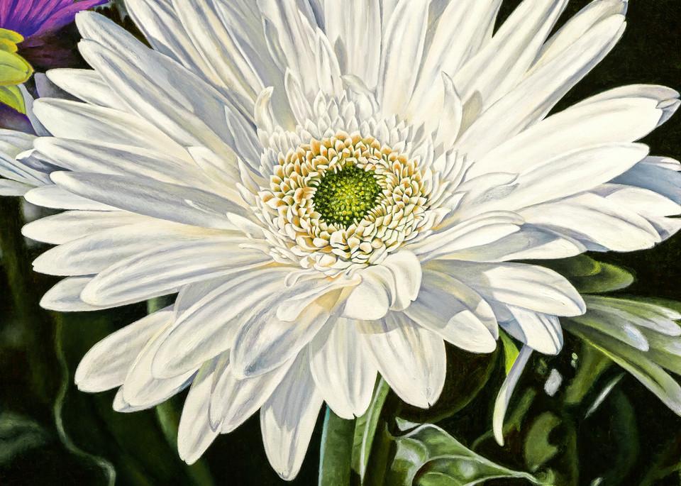 White Gerber ~ Cheer   Prints Art | Mercedes Fine Art