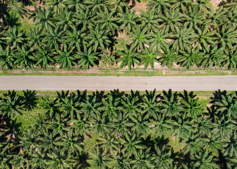 Palm Trees  Photography Art   Alex Nueschaefer Photography