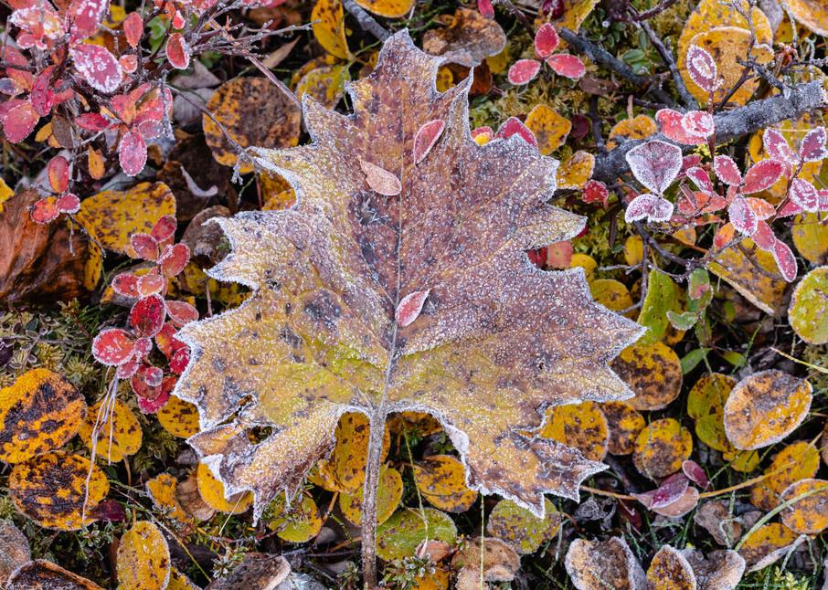 Hoarfrost on tundra flora