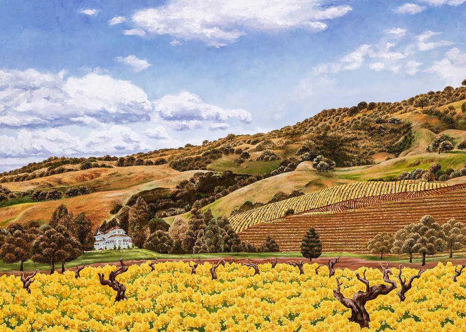 Sonoma And Old Vines   Prints Art | Mercedes Fine Art