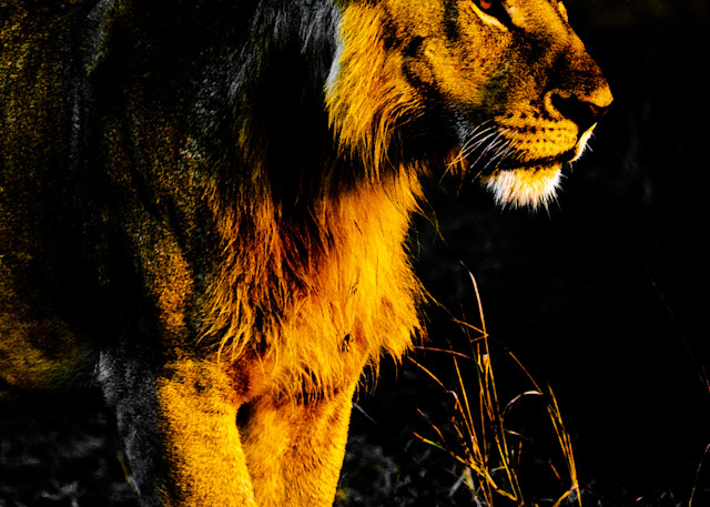 Vision Of The Mara Photography Art | Brokk Mowrey Photography