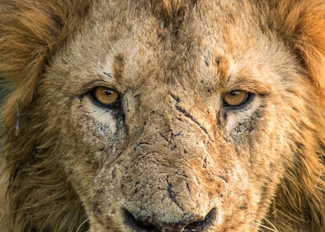 Battle Worn Photography Art | Brokk Mowrey Photography